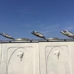 Rasatura esterno vasche particolare portelle